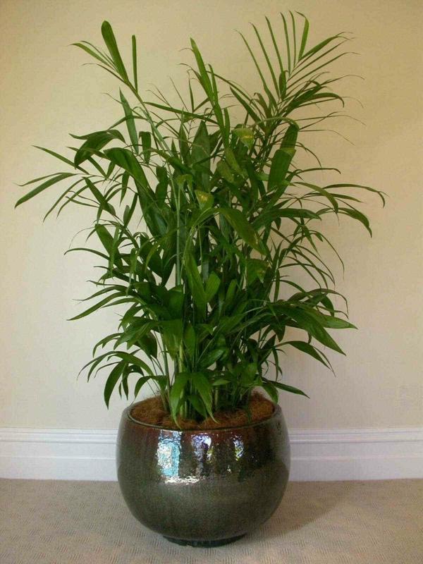 bamboo-palm-eine beige wand dahinter
