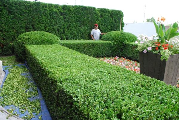 buchsbaum-formen-quadrat-formen