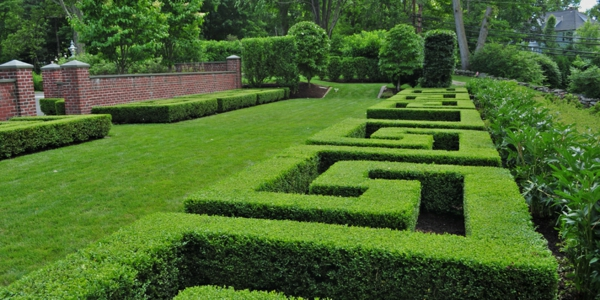 buchsbaum-formen-quadrat