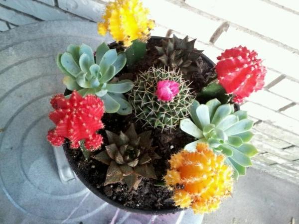 bunte-blüten-kaktus-arten- foto von oben machen