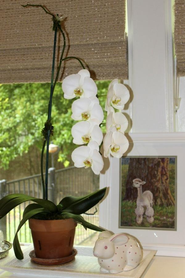 deko mit orchideen ein bild dahinter jalousien am fenster - Gestaltungsideen Durch Orchiden