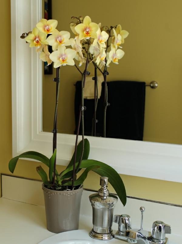 Deko mit orchideen 31 kreative ideen for Deko idee badezimmer