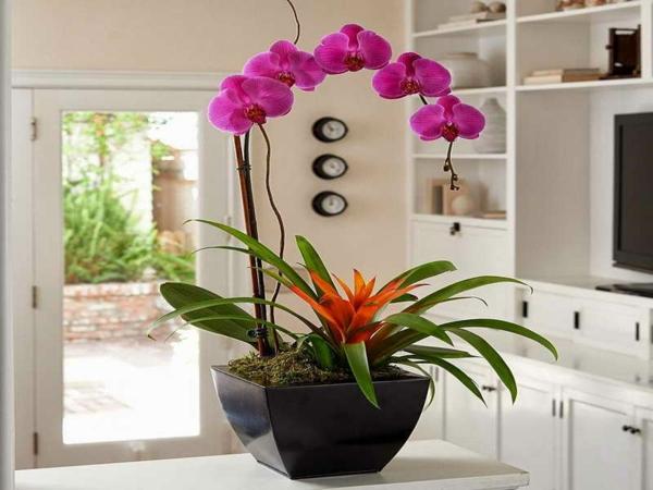 Gut Deko Mit Orchideen U2013 31 Kreative Ideen!
