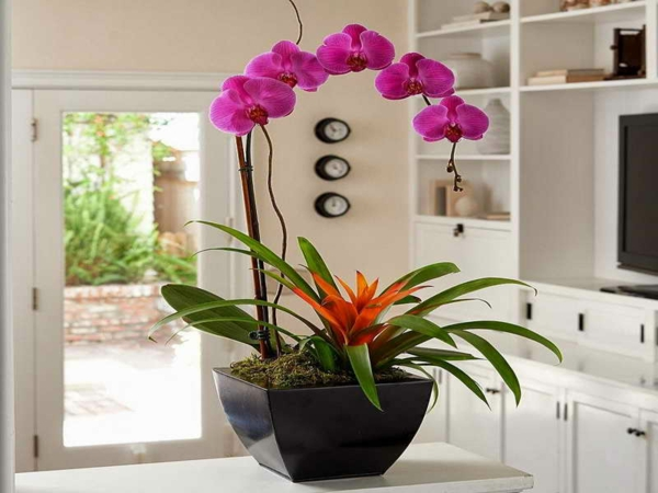 Deko mit orchideen 31 kreative ideen - Orchideen deko ...