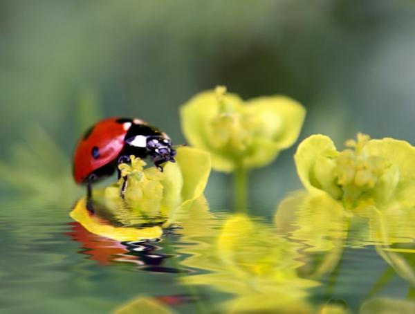 ein-marienkäfer-schöne-tierbilder- gelbe blumen