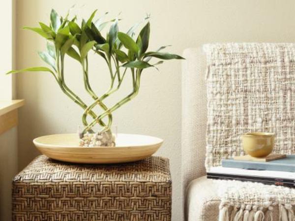 eine-grüne-pflanze-platzieren-feng-shui-energie
