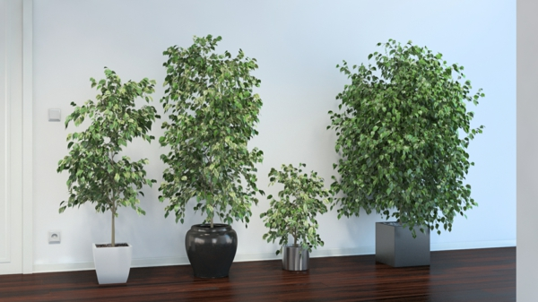 pflegeleichte zimmerpflanzen - 18 vorschläge! - archzine.net - Grose Wohnzimmer Pflanzen