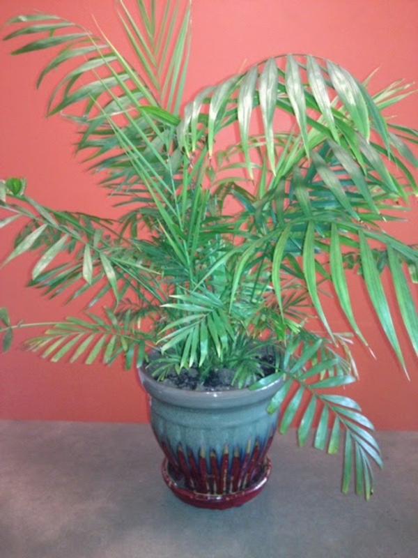 foto-von-einer-exotischen-grünen-pflanze-im zimmer mit interessanter wandfarbe