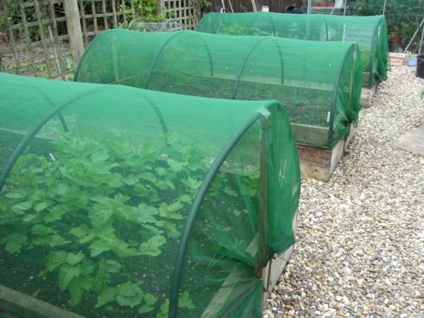 gemüsebeet-planen-grüne-beete
