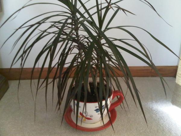 grünpflanzen-zimmerpflanzen-weiße wand dahinter