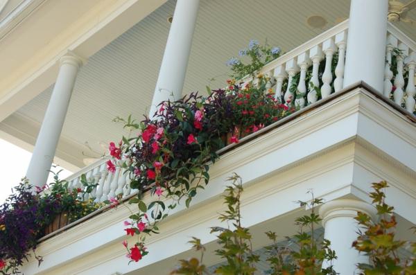 hängende-balkonpflanzen-Tim Downey