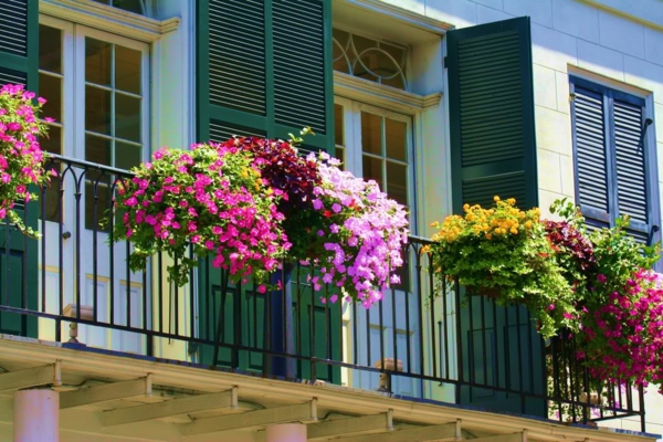 hängende-balkonpflanzen-petunien