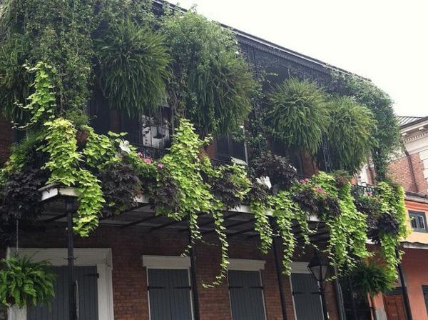 hängende-balkonpflanzen-reiche-flora