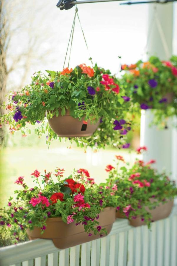 h ngende balkonpflanzen f r pr chtige outdoor r ume. Black Bedroom Furniture Sets. Home Design Ideas
