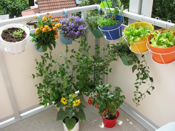 hängende-balkonpflanzen-veg-on-balcony