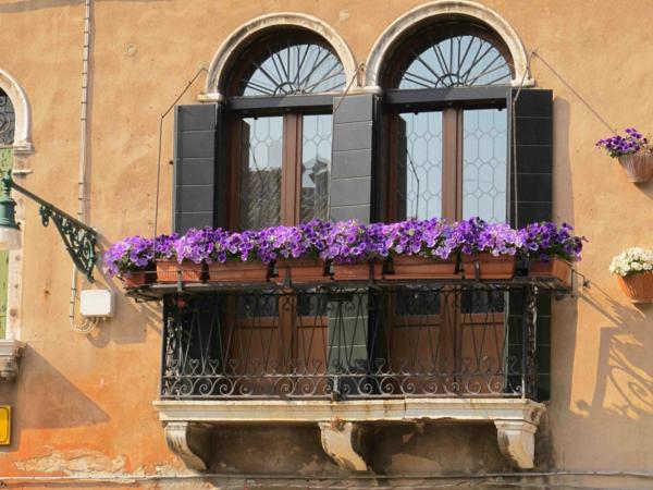 hängende-balkonpflanzen-venedig-lila