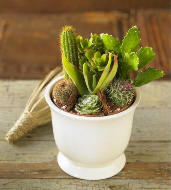 kaktus-arten-weißer-topf- sehr süß aussehen