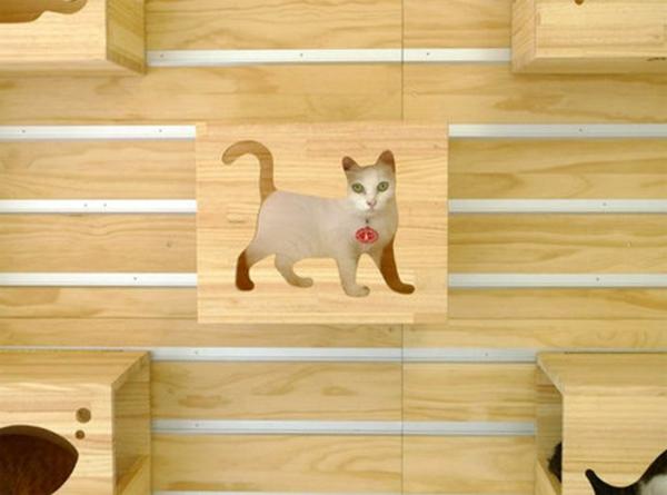 katzen-kletterwand-catswall-3