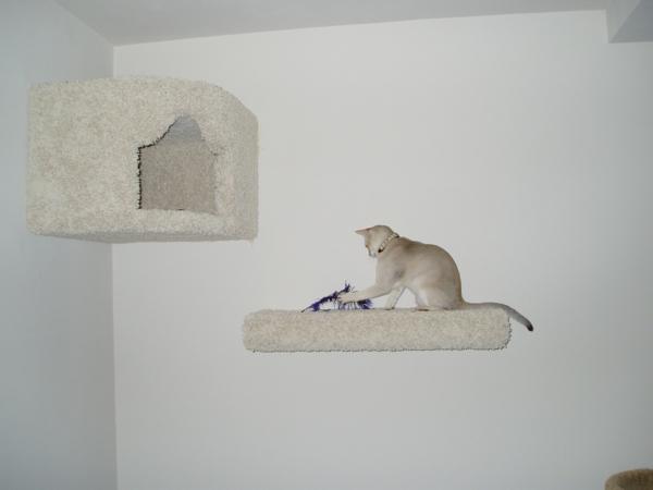 Weiße Katze mit weißer Wand