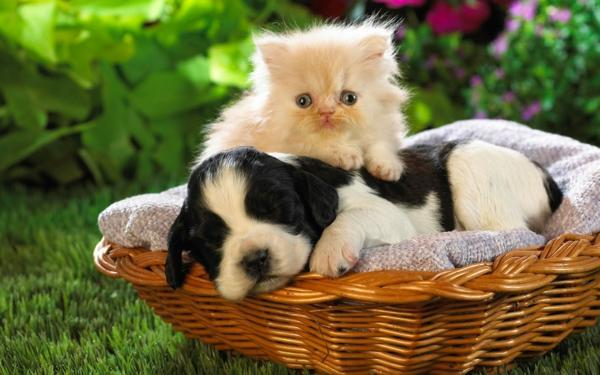 lustige-fotos-eine-kleine-katze-und-ein-süßer-hund-wunderschön aussehen