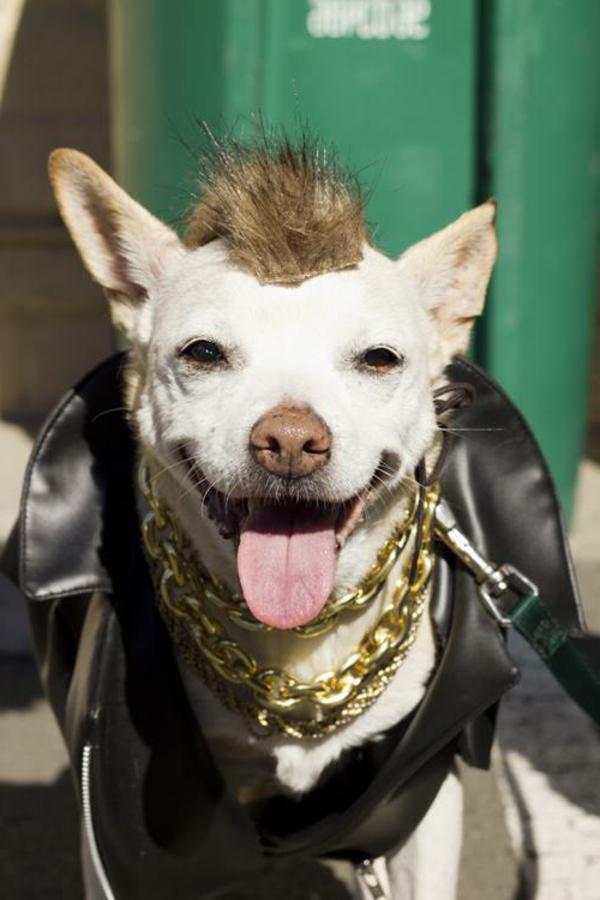 interessantes foto von einem komisch angekleideten hund