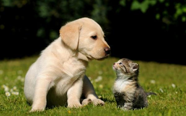 lustiges-foto-von-einem-hund-und-einer-katze- auf dem gras