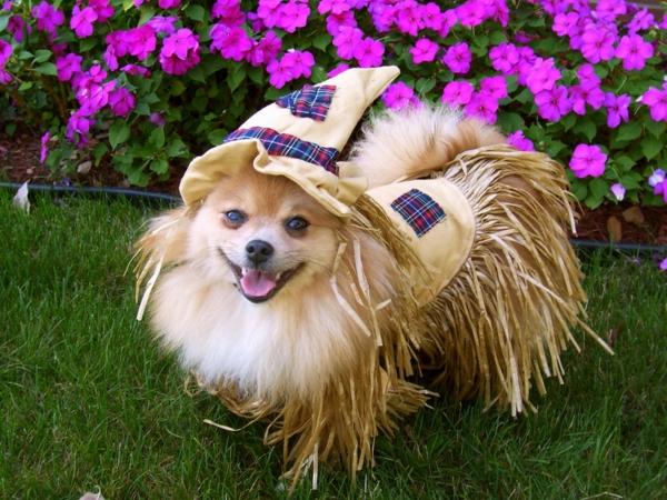 lustiges-foto-von-einem-hund, der sehr komisch angekleidet ist