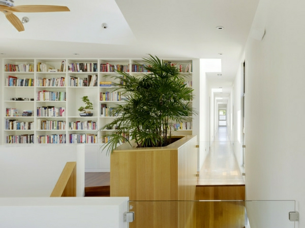 palme-im-garten-auch-als-zimmerpflanze-in-der-bibliothek- wände in weiß