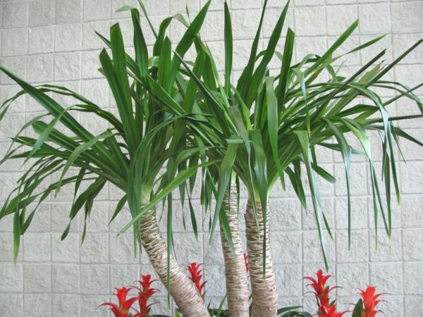 palmenarten-zimmerpflanzen-grün-dahinter ist eine weiße wand