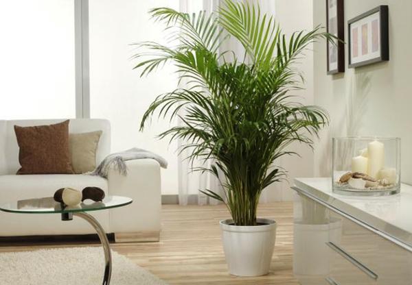 palmenarten-zimmerpflanzen-im-weißen-zimmer-neben ein paar dekorativen kerzen