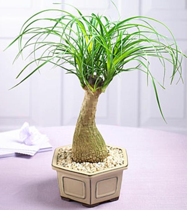 Einrichten Mit Farben Beige Farbtöne Für Gemütliche Ruhe: Palmenarten Zimmerpflanzen Wirken Sehr Schön
