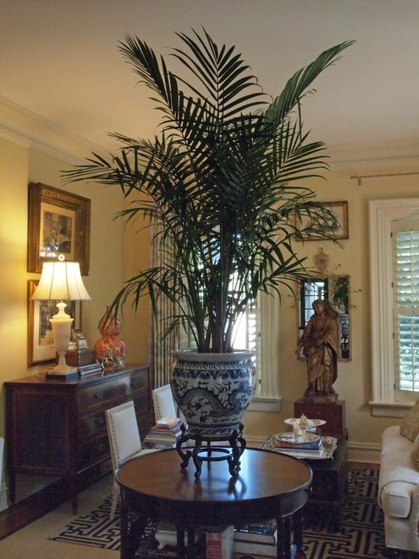 Palmenarten Zimmerpflanzen wirken sehr schön! - Archzine.net