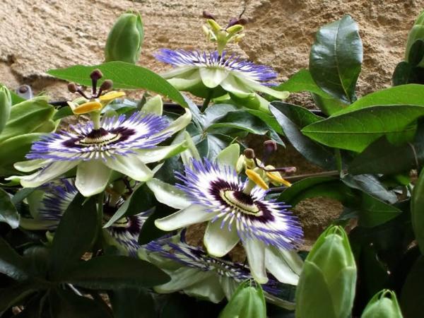 Exotische zimmerpflanzen tolle ideen f r ihre wohnung for Originelle zimmerpflanzen