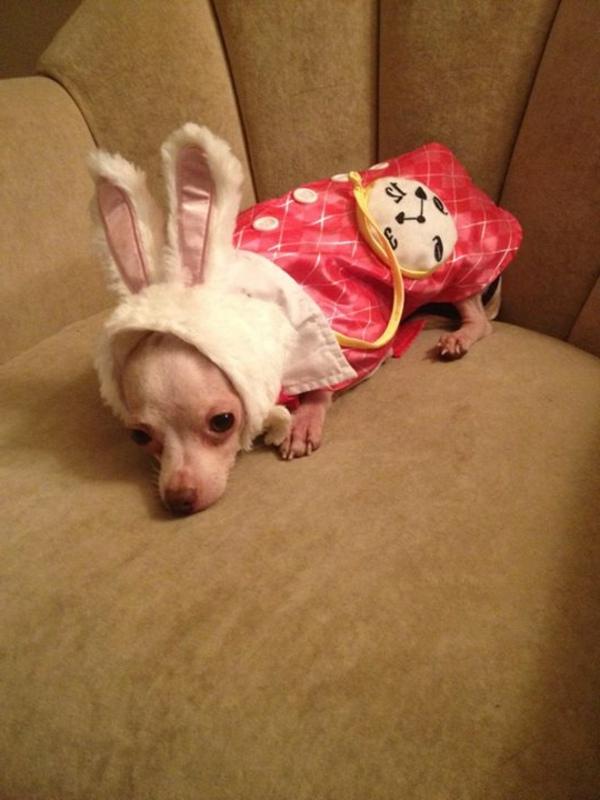 ein sehr kleiner hund mit komischer ankleidung