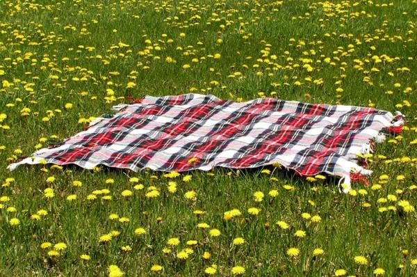 schön-aussehende-picknick-decke- auf dem gras- gelbe blümchen