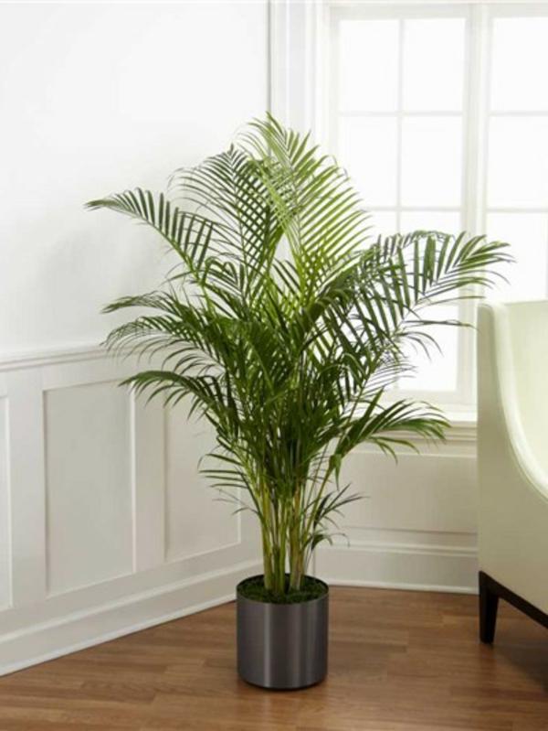 schöne-pflanze- im wohnzimmer mit weißer gestaltung