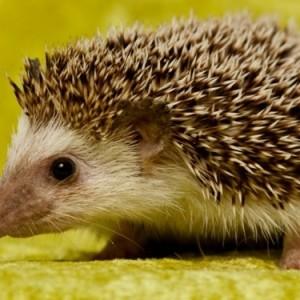 Schöne Tierbilder - Teil.1! Inspiration für Zu Hause!