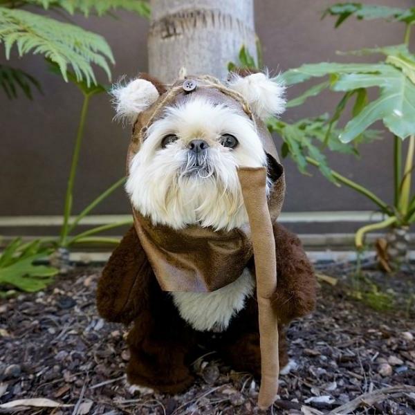 schöne-tierbilder-ein-kleiner-hund- supe komisch angekleidet