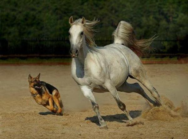 schöne-tierbilder-ein-pferd-und-ein-hund, die zusammen laufen