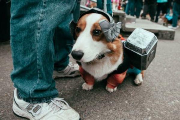 schöne-tierbilder-ein-süßer-hund- komisch angekleidet