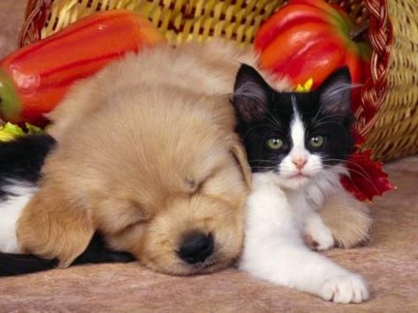 schöne-tierbilder-eine-kleine-katze-und-ein-hund schlafen nebeneinander