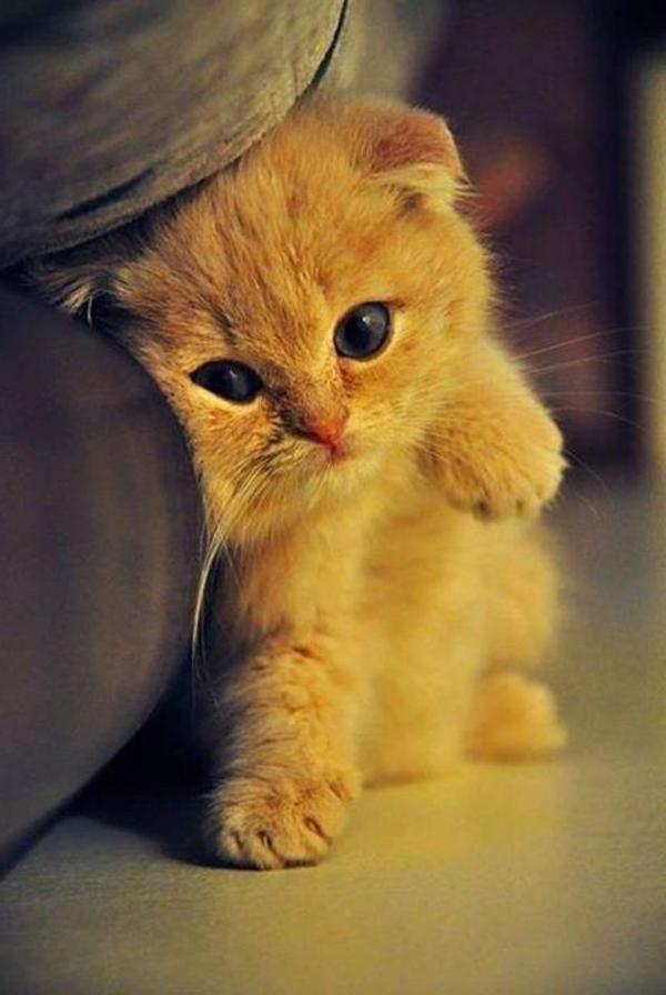 Cute Cat Orange Videos
