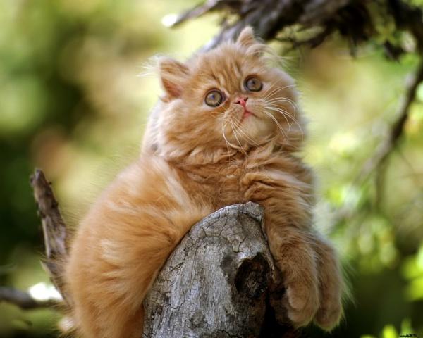 schöne-tierbilder-eine-super-süße-katze- schaut nach oben