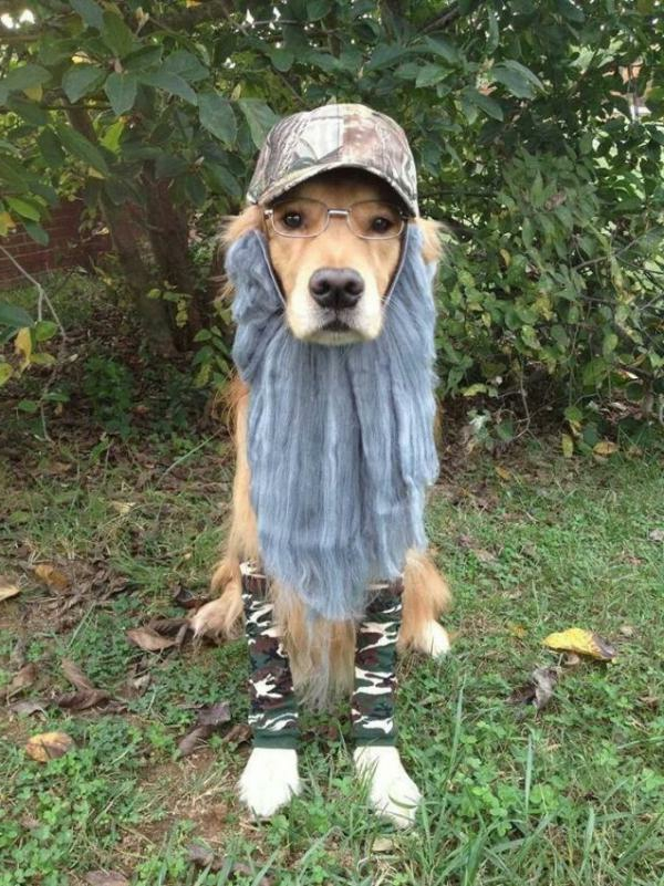 schöne-tierbilder-super-lustig-ein-hund- der komisch angekleidet ist