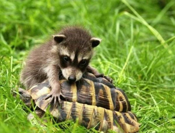 schöne-tierbilder-zwei-verschiedene-tierarten- spielen miteinander