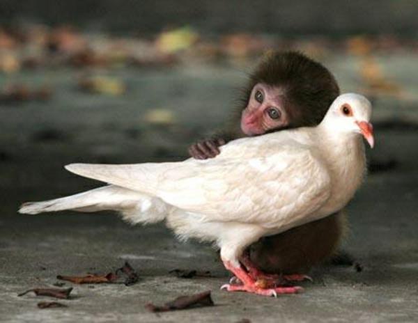 schöne-tierbilder- ein kleiner affe und eine weiße taube