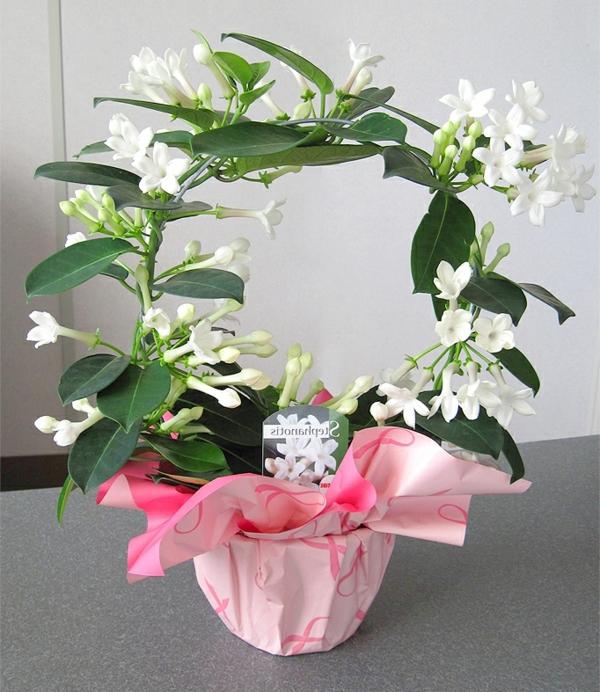 Pflegeleichte zimmerpflanzen 18 vorschl ge - Bluhende zimmerpflanzen bilder ...