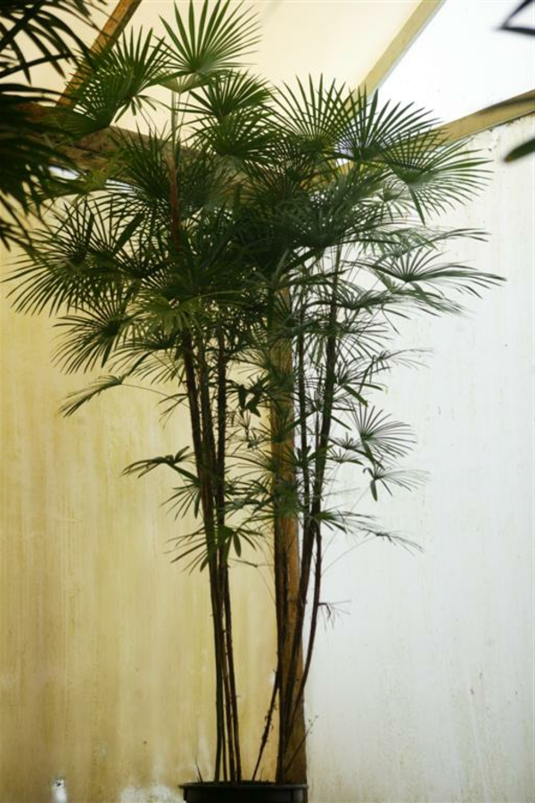 sehr-große-und-schöne-pflanze- beige und weiß kombinieren