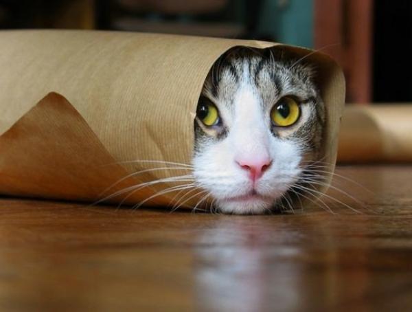 super-süße-katze-in-gerolltem-papier-schöne-tierbilder- foto von nahem genommen