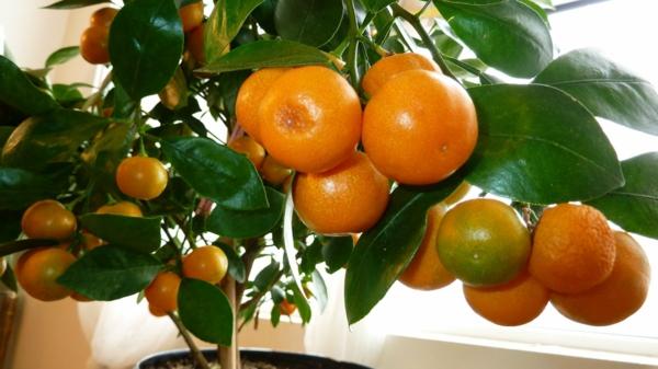tolle-tropische-zimmerpflanze-orange-im-topf